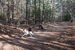 dog-sled-races-6442.jpg