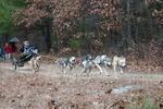 dog-sled-races-6549.jpg